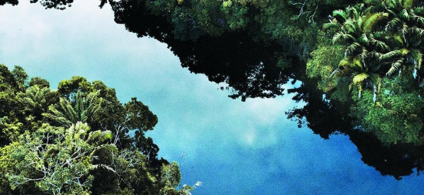 Amazonie. Le chamane et la pensée de la forêt.  Exposition collective