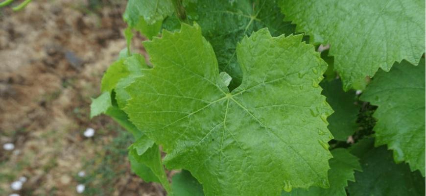 Soirée oenologique : C'est quoi un vin nature? Soirée