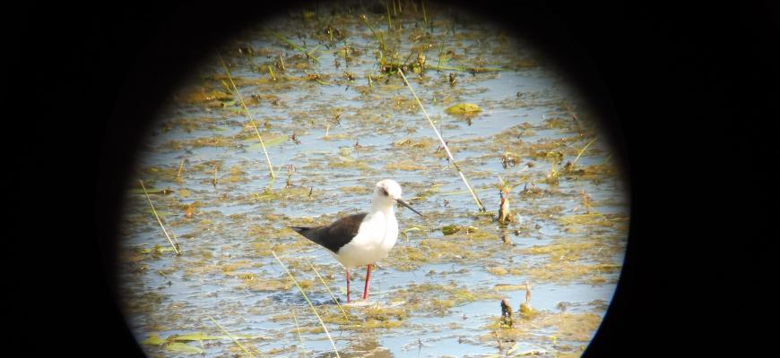 L'ornithologie pour tous : matinée conviviale  Visites et sorties