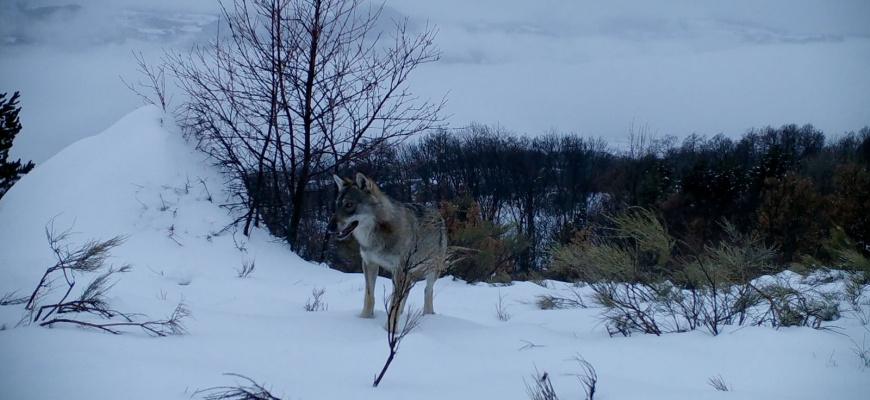 Marche avec les loups Documentaire