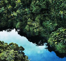 Image Amazonie. Le chamane et la pensée de la forêt.  Exposition collective