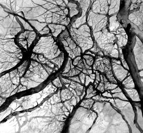 Histoires de vignes et d'arbres