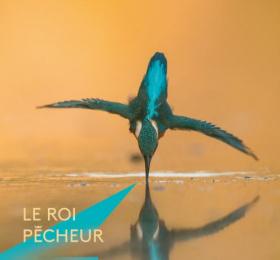 Image Le Roi Pêcheur - la vie du martin-pêcheur, vue par Erwan Balança Photographie