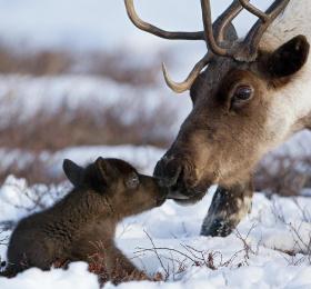 Image Sa majesté la nature, photos de Sergey Gorshkov Photographie