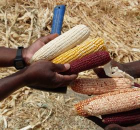 Les Agricultures familiales dans les pays du Sud