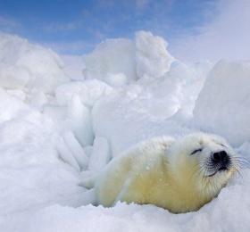Image Arctique russe de Sergey Anismov  Photographie