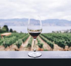 Méthodologie de la dégustation d'un vin rouge