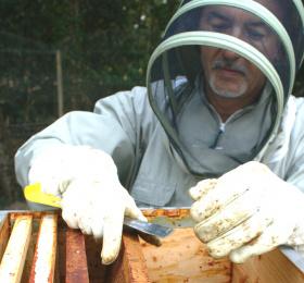 Récolte du miel Goût'lainais