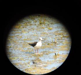 Image L'ornithologie pour tous : matinée conviviale  Visites et sorties