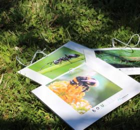Atelier 4/6 ans : Le rallye des petits insectes